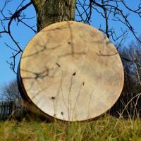 Ulustrační obrázek k akci Učení šamanského stromu - láska k životu