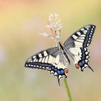 Ulustrační obrázek k akci Zázraky přírody